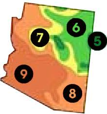 Arizona Trees Az Plants Best Fruit Tree